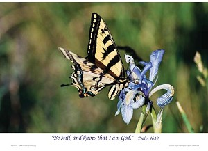 "Butterfly 7"" x 5"" Color Print"